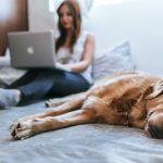Videosprechstunde für Hund, Katze & Co.